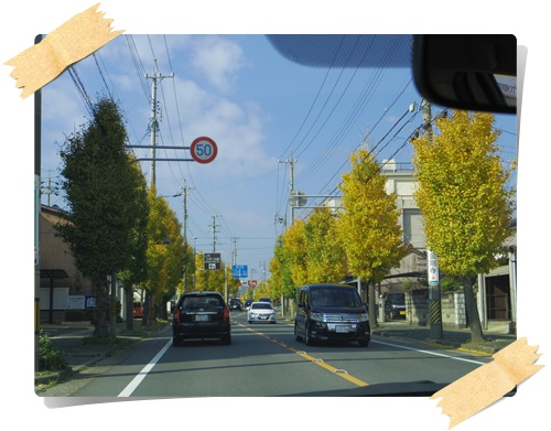 銀杏IMGP1810-20141130