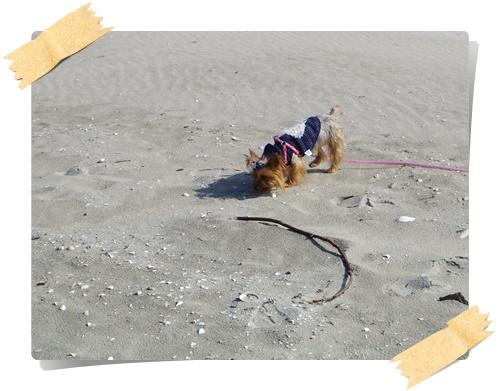 砂浜IMGP1812-20141130