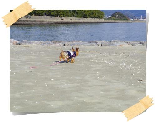 砂浜IMGP1813-20141130
