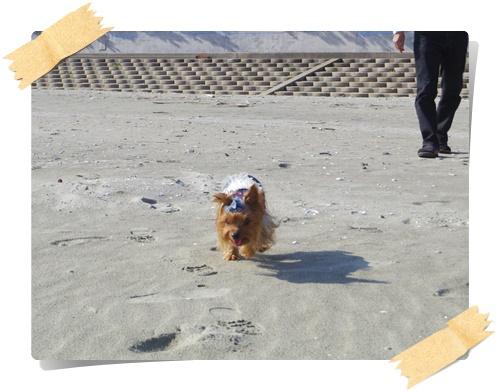 砂浜IMGP1814-20141130