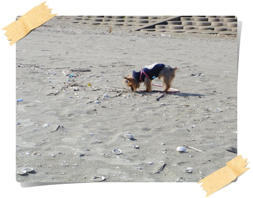 砂浜IMGP1816-20141130