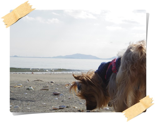 砂浜IMGP1818-20141130