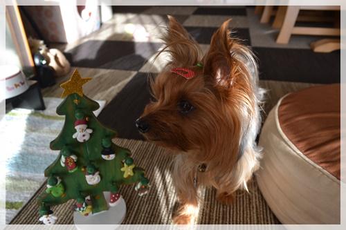 クリスマスDSC_0875-20141202