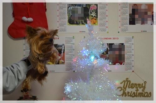 クリスマスDSC_0886-20141202