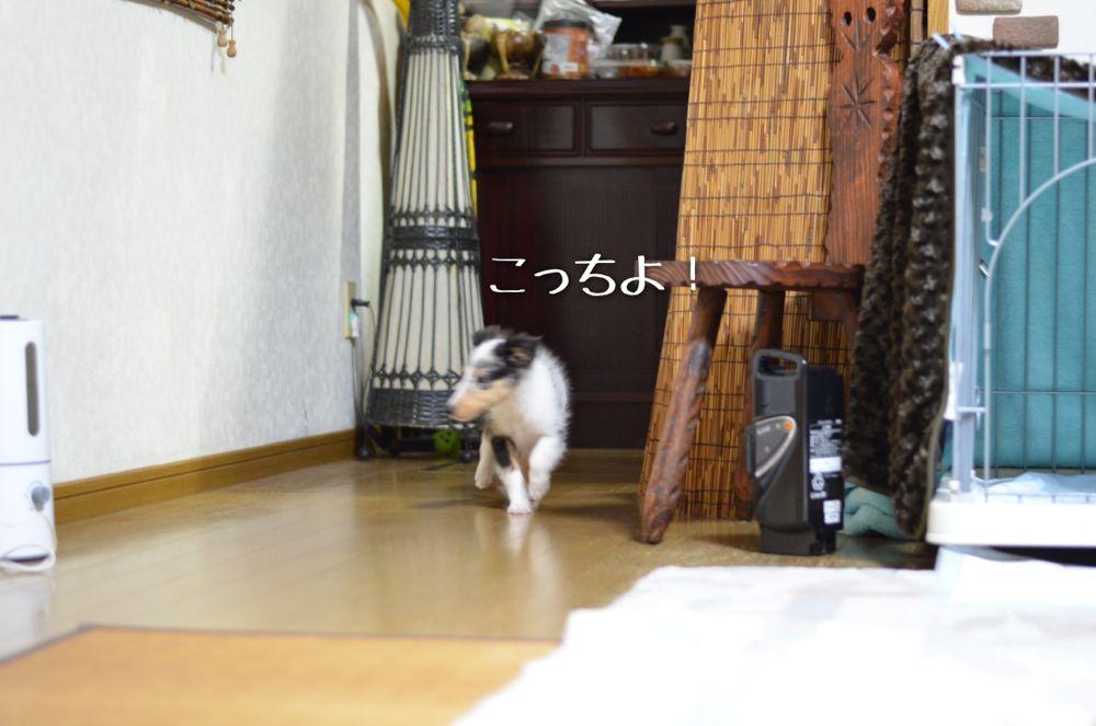 IMG_5246.jpg