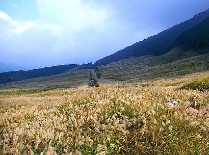 仙石原ススキ画像-5