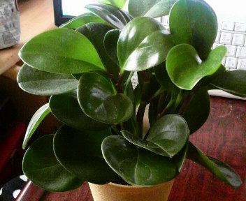 11.26観葉植物