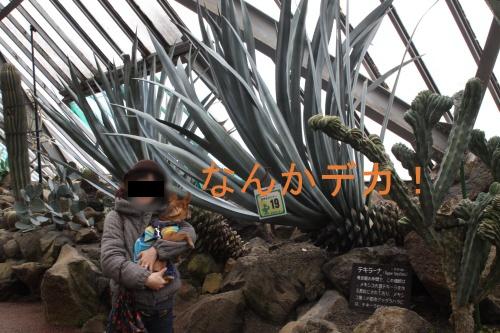 s0363_20121205201839.jpg
