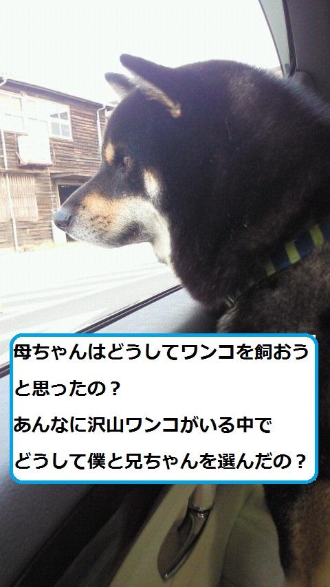 犬を飼う3