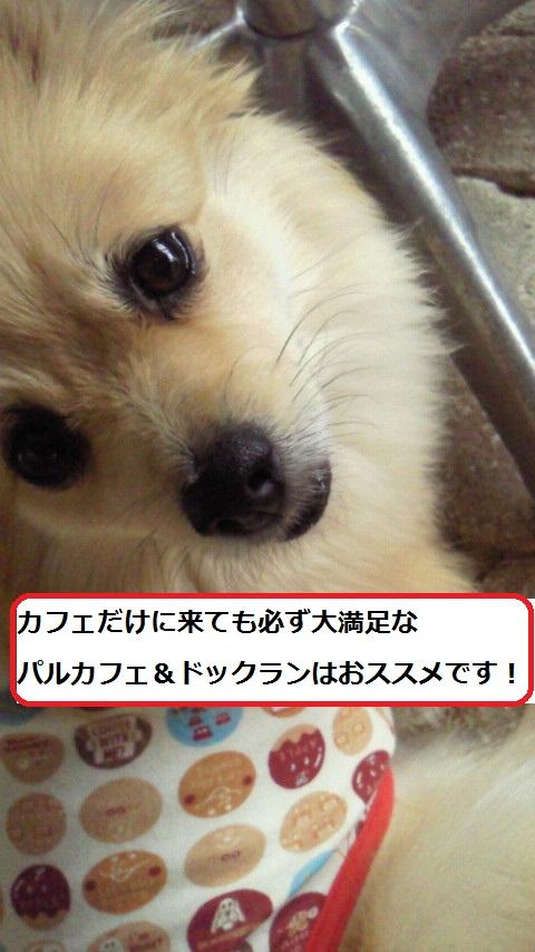 ぱるかふぇ
