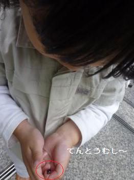 さくらんぼ20120614③