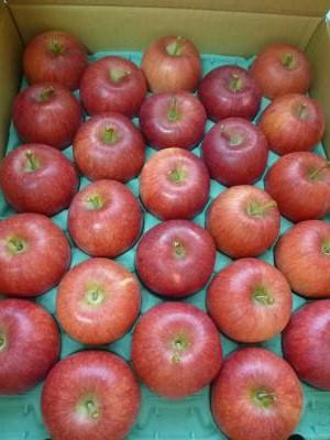 りんご201210