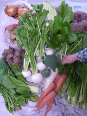 野菜20121203