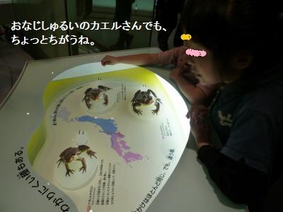 科学博物館2013②