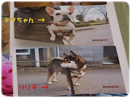 DSC_0003bb.jpg