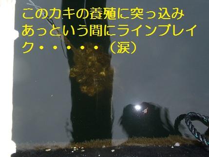 20130804_銀鱗功7