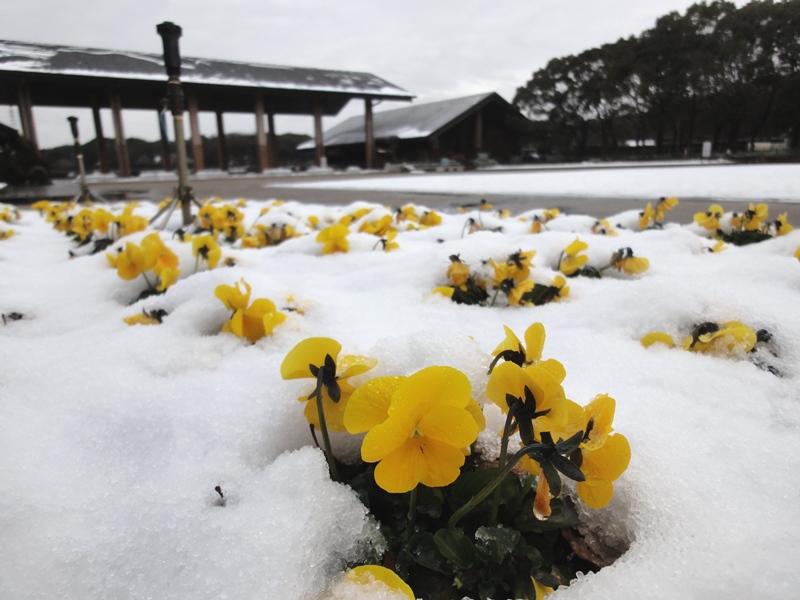 大泉雪景色3140208