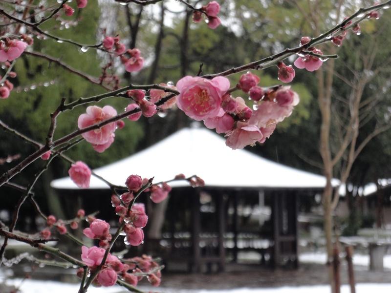 大泉雪景色4140208