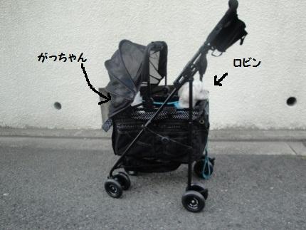 DSC05112 (430x323)
