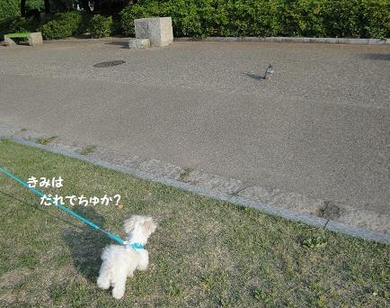 DSC03832.jpg