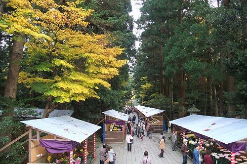 弥彦神社2