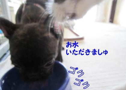 20120924005.jpg