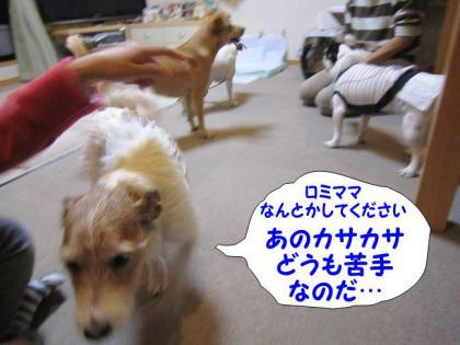 20121110012.jpg