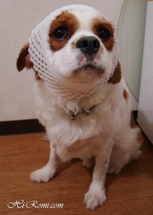 アンティーク、ヴィンテージ ランプ 照明 照明 関西 神戸 看板犬 キャバリア Hi-Romi.com