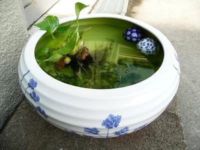 水鉢 001