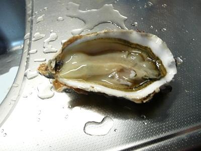 牡蛎 007