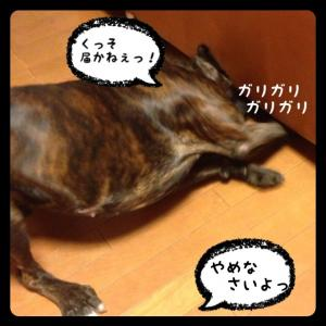 IMG_0956_convert_20121203173904.jpg
