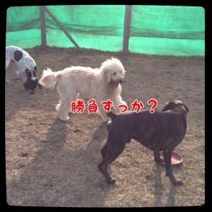 IMG_4194_convert_20130209175255.jpg
