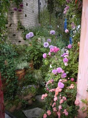 国バラ_魔法の庭20120515