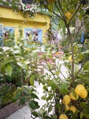 国バラ_魔法の庭20120515_4
