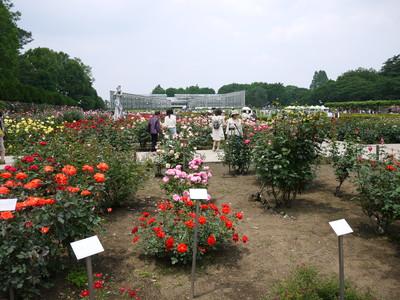 神代植物公園20120521