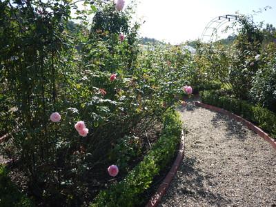 オースチン_ガーデンの様子20121026_9