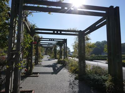 花フェスタ記念公園_駐車場20121029