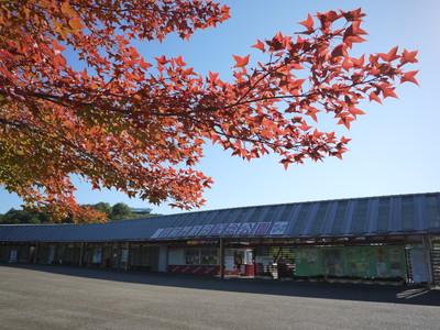 花フェスタ記念公園20121029
