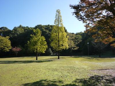 花フェスタ記念公園_広場20121029