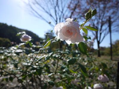 花フェスタ記念公園_ダブ20121029