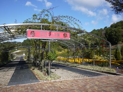 花フェスタ記念公園_世界のバラ園20121029