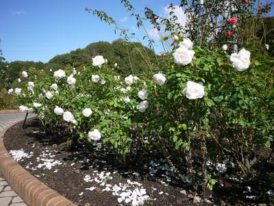 花フェスタ記念公園_グラミスキャッスル20121029