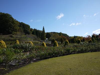 花フェスタ記念公園_世界のバラ園20121029_2