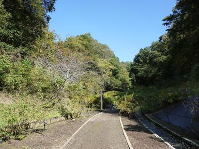 花フェスタ記念公園_原種の谷20121029