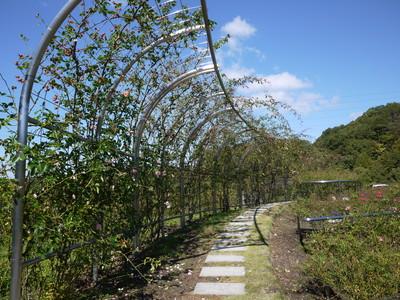 花フェスタ記念公園_世界のバラ園20121029_5