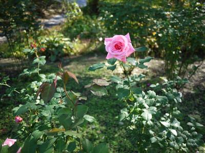 花フェスタ記念公園_ジーンボーナー20121029