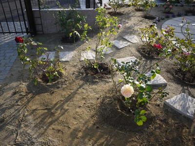 地植え20121121