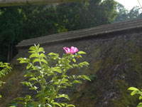 hamanasu20120829.jpg