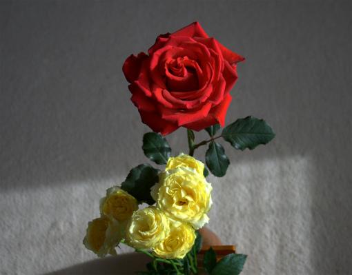 s-550-1赤いバラ