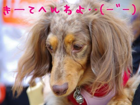11_original_convert_20120605162343.jpg